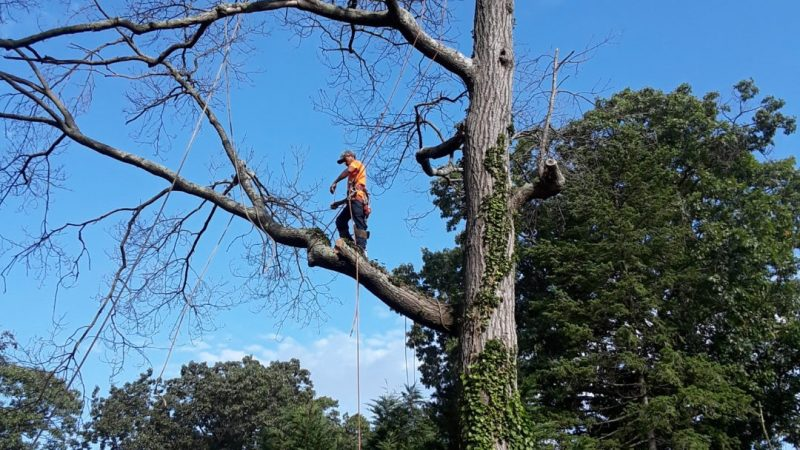 Reasons Why Hiring A Tree Care Professional Company Is A Great Idea
