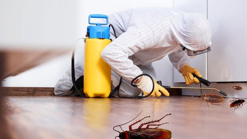 What is an Ideal Pest Control Company in Your Region?