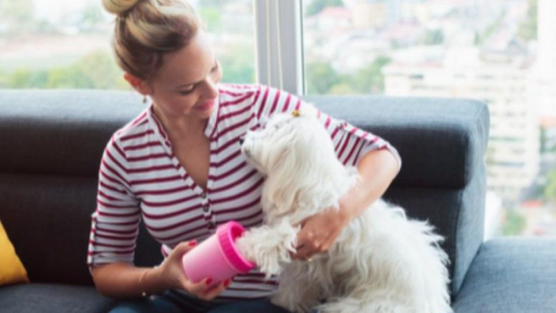 Easy ways to dog-proof your home