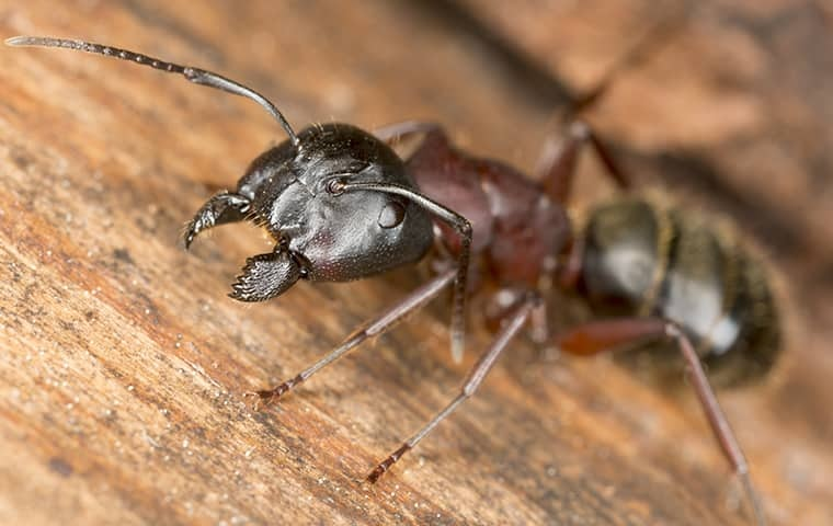 Ant Prevention And Ant Control Services
