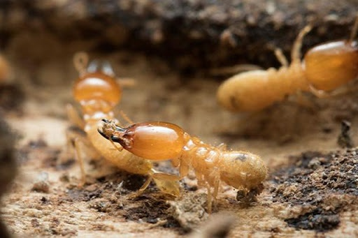 How To Choose A Termite Control Specialist
