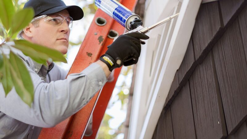 How To Choose The Best Bat Removal Services Provider