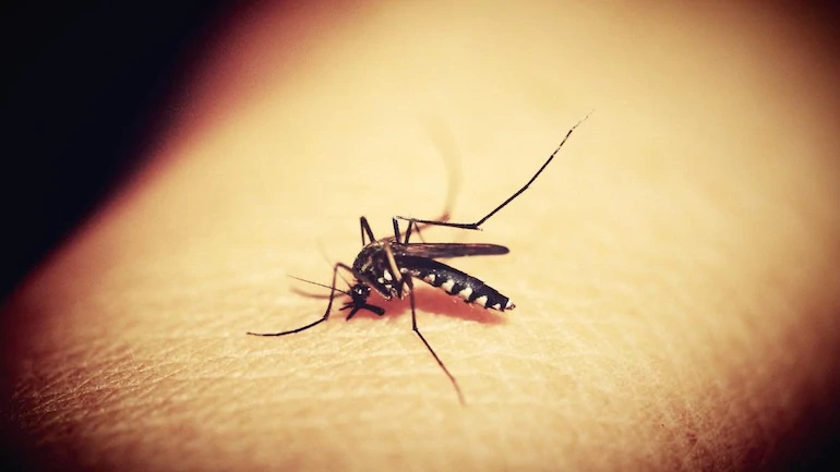 Strategizing Successful Mosquito Pest Control: The Best & Effective Ways to Protect Your Home