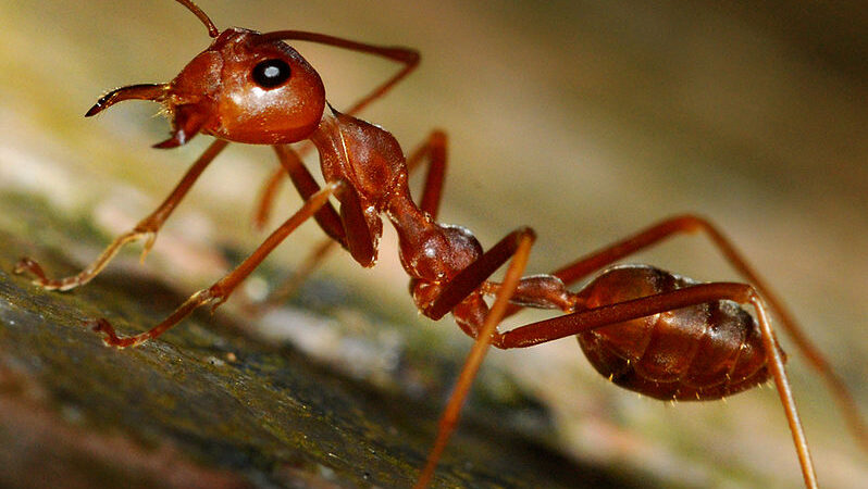 A Few Things to Learn About Ants
